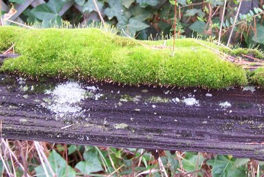 fencerail-moss.jpg