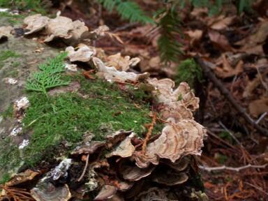 grand_forest1.jpg