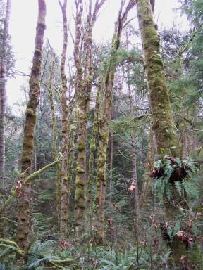 grand_forest2.jpg