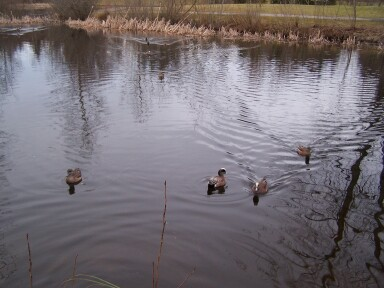 duckpond1.jpg