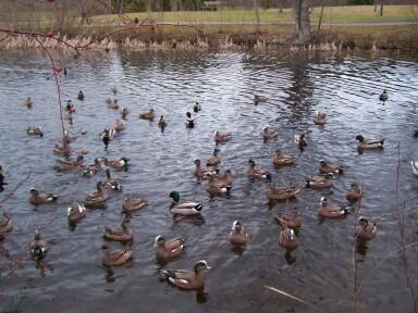 duckpond2.jpg
