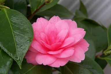 pinkbloom.jpg