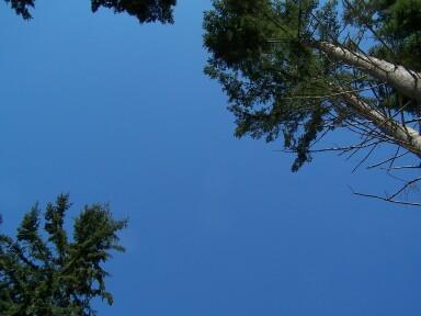 bluebirdday.jpg