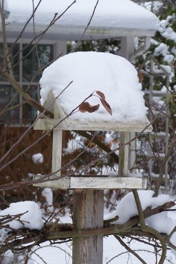 snowybirdfeeder