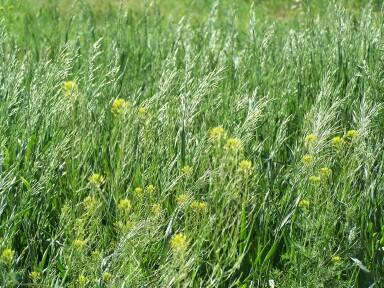 riverdalegrasses